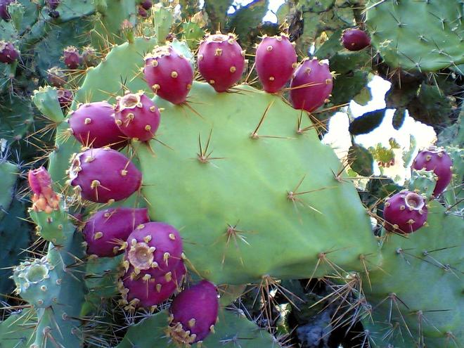 Những loại trái cây bất chấp mọi quy luật để tồn tại với vẻ ngoài vô cùng kỳ dị - Ảnh 10.