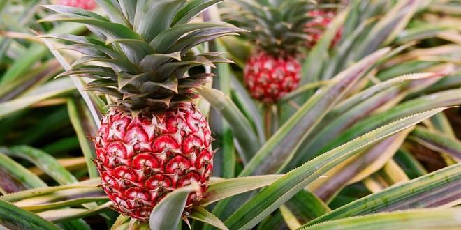 Những loại trái cây bất chấp mọi quy luật để tồn tại với vẻ ngoài vô cùng kỳ dị - Ảnh 9.
