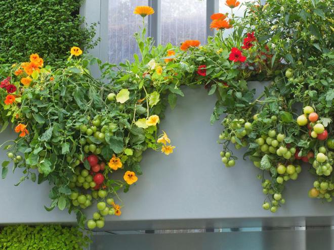 10 cách trồng rau quả đẹp như trồng hoa để vừa có rau ăn vừa làm đẹp khu vườn - Ảnh 1.