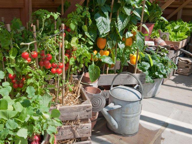 10 cách trồng rau quả đẹp như trồng hoa để vừa có rau ăn vừa làm đẹp khu vườn - Ảnh 2.