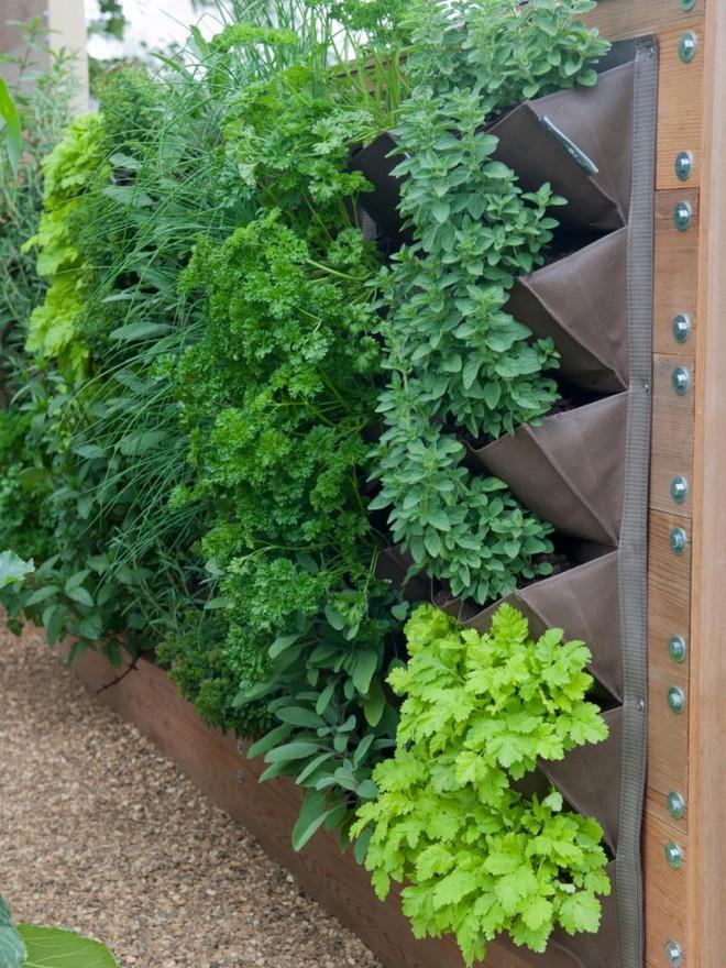 10 cách trồng rau quả đẹp như trồng hoa để vừa có rau ăn vừa làm đẹp khu vườn - Ảnh 3.