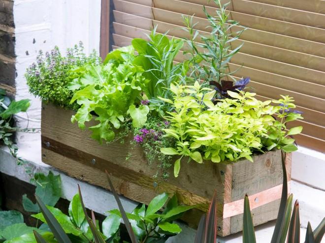 10 cách trồng rau quả đẹp như trồng hoa để vừa có rau ăn vừa làm đẹp khu vườn - Ảnh 4.