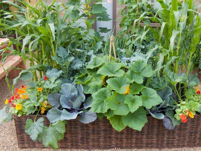 10 cách trồng rau quả đẹp như trồng hoa để vừa có rau ăn vừa làm đẹp khu vườn - Ảnh 6.