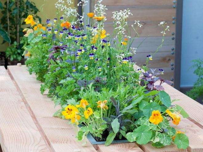 10 cách trồng rau quả đẹp như trồng hoa để vừa có rau ăn vừa làm đẹp khu vườn - Ảnh 9.