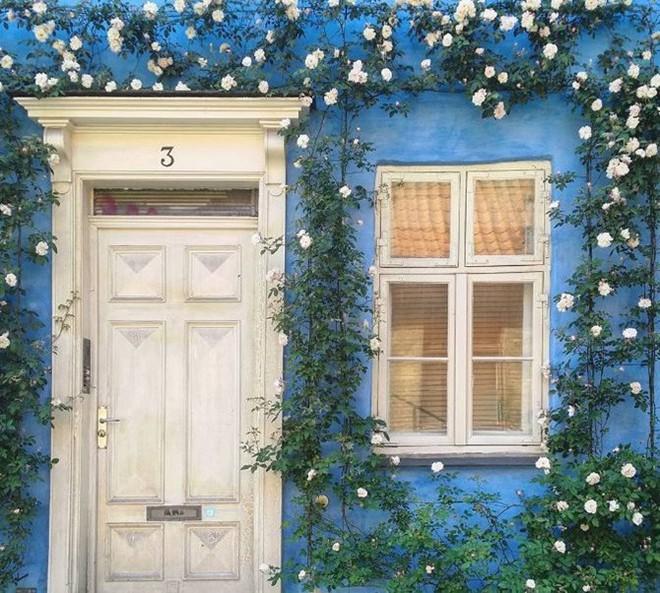 Ngây ngất với những ngôi nhà có khung cửa rộn ràng hoa lá đón xuân về - Ảnh 1.