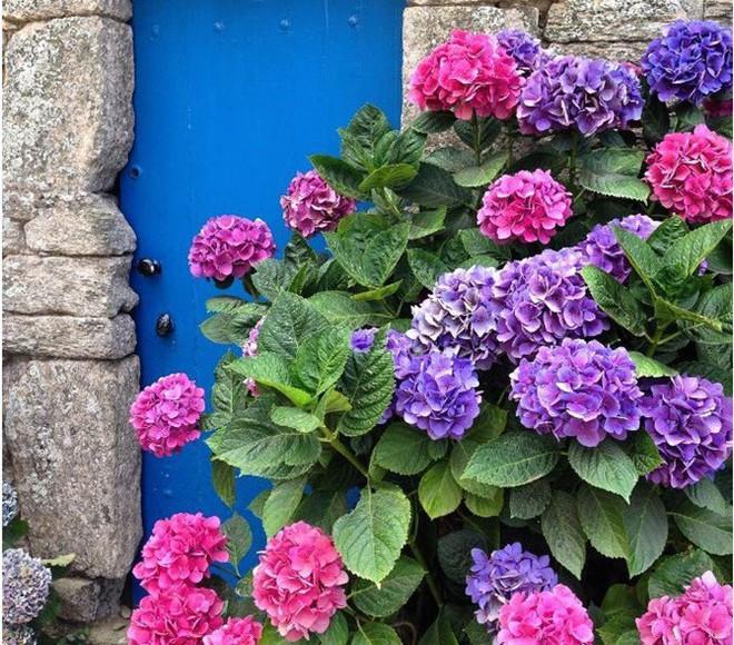 Ngây ngất với những ngôi nhà có khung cửa rộn ràng hoa lá đón xuân về - Ảnh 7.