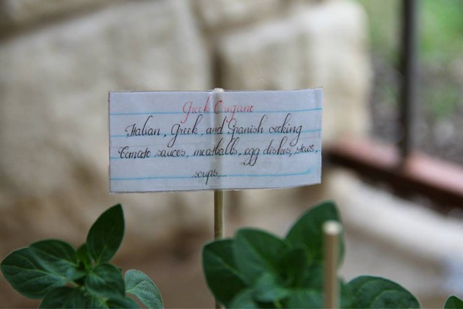 Nữ du học sinh Việt tại Mỹ tiết lộ bí quyết tạo khu vườn mini 6m² nhưng đủ rau và hoa đẹp hút hồn - Ảnh 16.