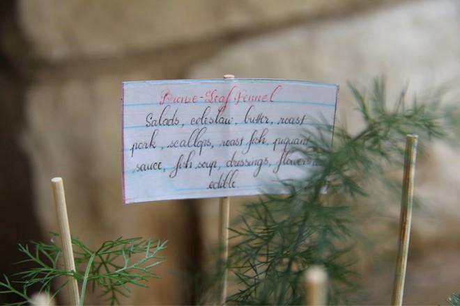 Nữ du học sinh Việt tại Mỹ tiết lộ bí quyết tạo khu vườn mini 6m² nhưng đủ rau và hoa đẹp hút hồn - Ảnh 17.