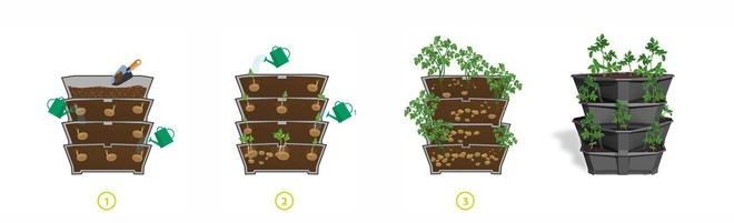 Đủ rau củ quả ăn cả năm nhờ kệ trồng cây tiết kiệm không gian cho nhà nhỏ - Ảnh 3.