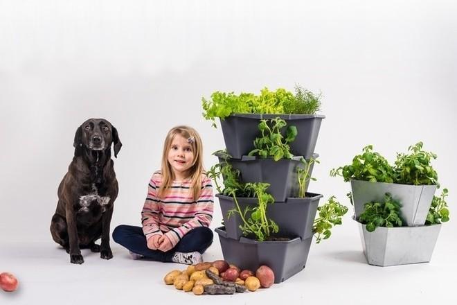 Đủ rau củ quả ăn cả năm nhờ kệ trồng cây tiết kiệm không gian cho nhà nhỏ - Ảnh 2.