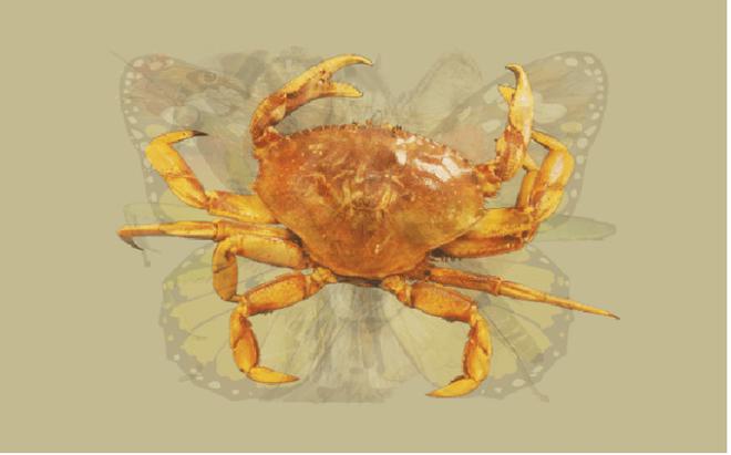 Nhìn vào bức tranh này đi, con vật đầu tiên mà bạn nhìn thấy sẽ bật mí đặc điểm thú vị về tính cách của bạn - Ảnh 4.