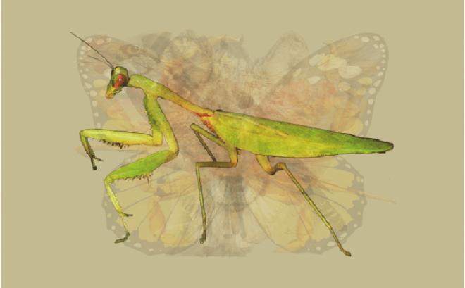 Nhìn vào bức tranh này đi, con vật đầu tiên mà bạn nhìn thấy sẽ bật mí đặc điểm thú vị về tính cách của bạn - Ảnh 5.