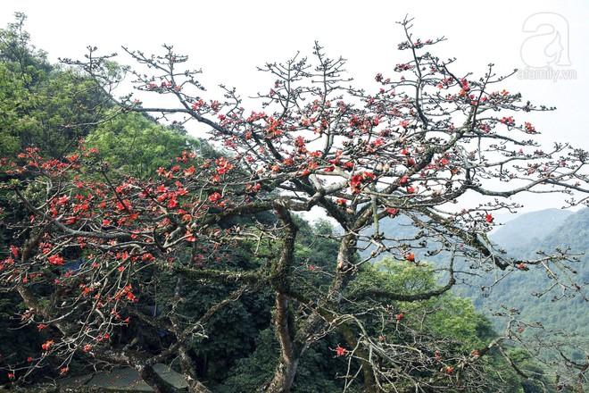 Tháng 3 về, hoa gạo thắp sáng núi rừng chùa Hương - Ảnh 2.