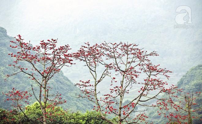 Tháng 3 về, hoa gạo thắp sáng núi rừng chùa Hương - Ảnh 3.