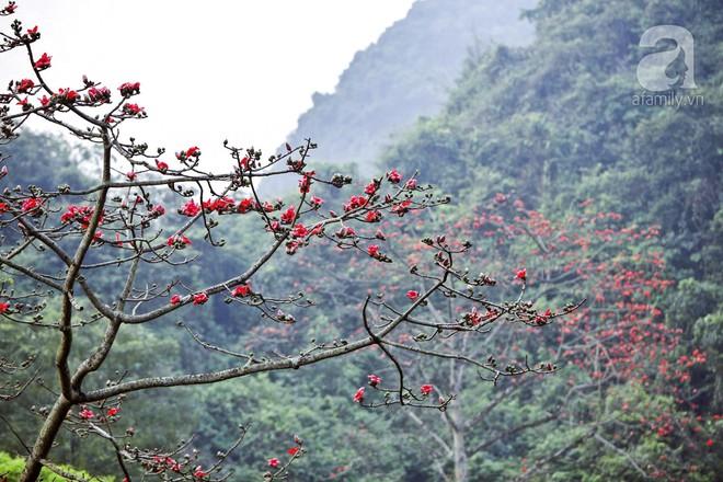 Tháng 3 về, hoa gạo thắp sáng núi rừng chùa Hương - Ảnh 4.