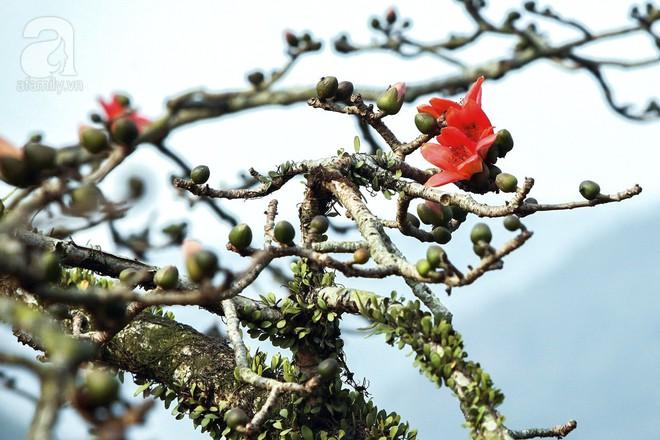 Tháng 3 về, hoa gạo thắp sáng núi rừng chùa Hương - Ảnh 8.