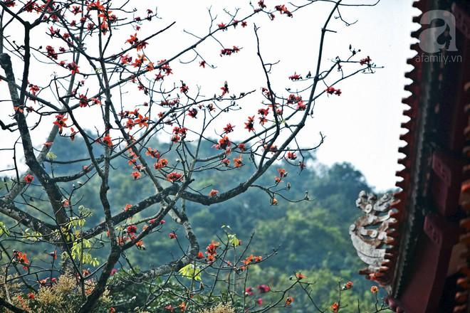 Tháng 3 về, hoa gạo thắp sáng núi rừng chùa Hương - Ảnh 14.