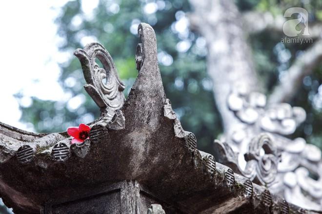 Tháng 3 về, hoa gạo thắp sáng núi rừng chùa Hương - Ảnh 15.
