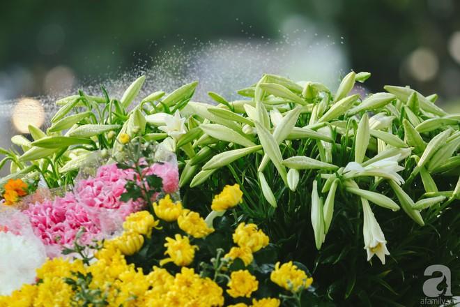 Hoa loa kèn trắng tinh khôi đã về trên phố Hà Nội, chị em nhanh tay mua kẻo hết mùa - Ảnh 4.