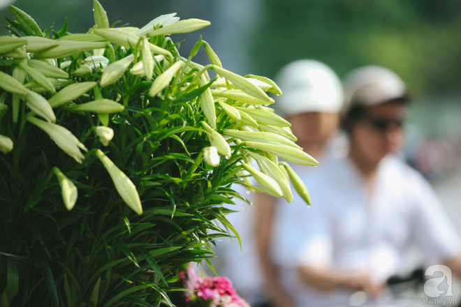 Hoa loa kèn trắng tinh khôi đã về trên phố Hà Nội, chị em nhanh tay mua kẻo hết mùa - Ảnh 7.