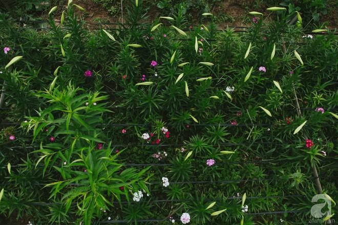 Hoa loa kèn trắng tinh khôi đã về trên phố Hà Nội, chị em nhanh tay mua kẻo hết mùa - Ảnh 3.