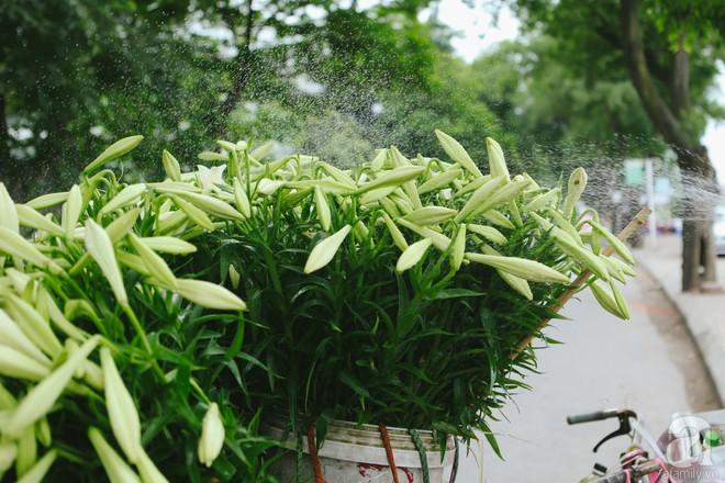 Hoa loa kèn trắng tinh khôi đã về trên phố Hà Nội, chị em nhanh tay mua kẻo hết mùa - Ảnh 1.