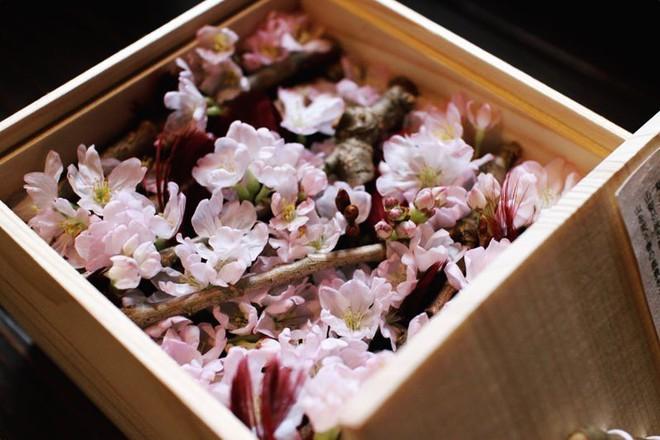 Ngẩn ngơ trước vẻ đẹp của hoa anh đào Nhật Bản trong mùa Hanami - Ảnh 9.
