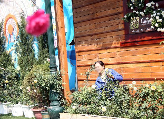 Lễ hội hoa hồng Bulgaria 2018: Khách vô tư vượt rào, vít hoa để chụp ảnh bất chấp biển cấm - Ảnh 14.