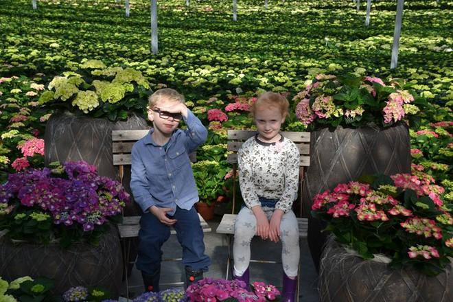 Thay vì được quẳng cho chiếc ipad, mỗi cuối tuần trẻ con Hà Lan lại đi chơi với... heo - Ảnh 1.