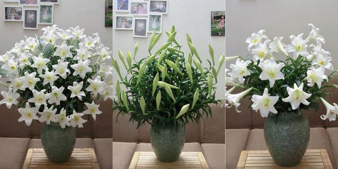 Tháng Tư ngất ngây với mùa hoa loa kèn và những cách cắm đẹp lung linh mê hồn - Ảnh 11.