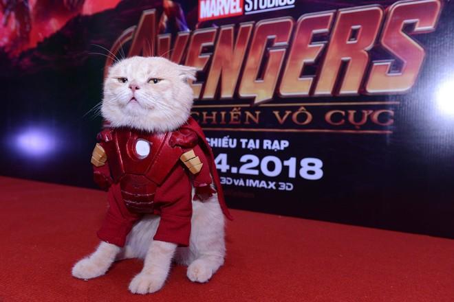 Cả dàn sao Việt đều bị lu mờ trước nhân vật đặc biệt này trong họp báo Avengers - Ảnh 1.