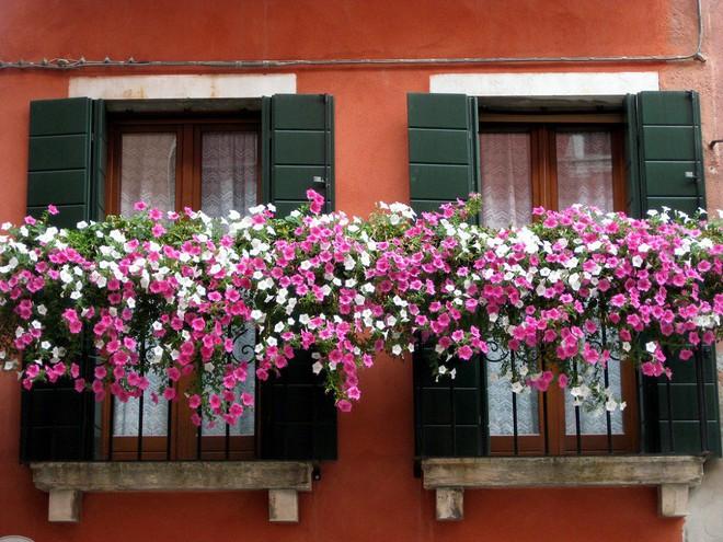 Ngất lịm với những ban công rực rỡ sắc hoa trong sắc hè   - Ảnh 11.