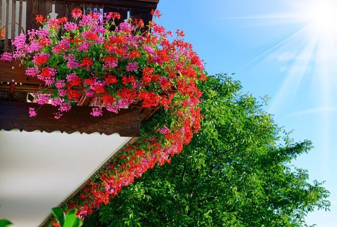 Ngất lịm với những ban công rực rỡ sắc hoa trong sắc hè   - Ảnh 13.