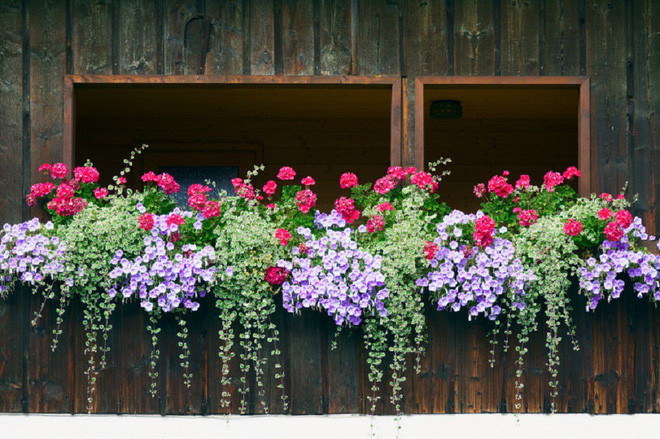 Ngất lịm với những ban công rực rỡ sắc hoa trong sắc hè   - Ảnh 14.