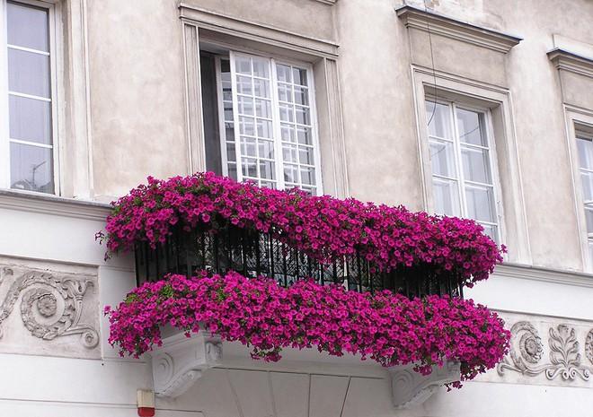 Ngất lịm với những ban công rực rỡ sắc hoa trong sắc hè   - Ảnh 3.