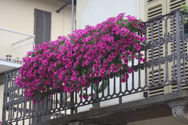 Ngất lịm với những ban công rực rỡ sắc hoa trong sắc hè   - Ảnh 4.