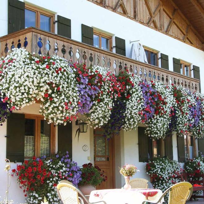 Ngất lịm với những ban công rực rỡ sắc hoa trong sắc hè   - Ảnh 8.