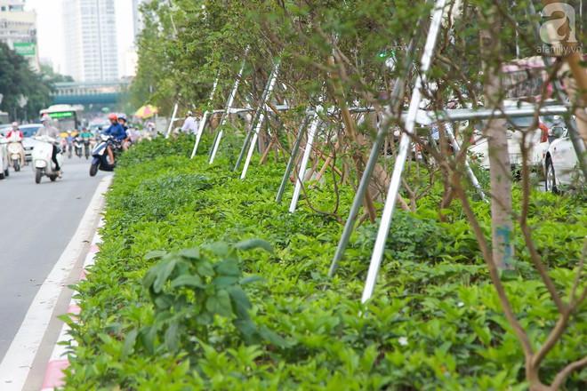 Hà Nội: Hàng cây Phong lá đỏ được thay thế trụ chống chắc chắn trước mùa mưa bão - Ảnh 1.