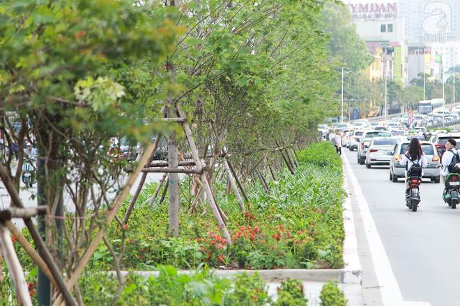 Hà Nội: Hàng cây Phong lá đỏ được thay thế trụ chống chắc chắn trước mùa mưa bão - Ảnh 5.