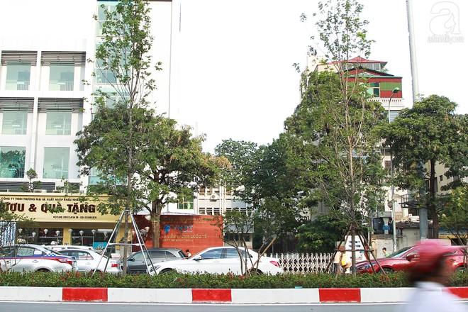 Hà Nội: Hàng cây Phong lá đỏ được thay thế trụ chống chắc chắn trước mùa mưa bão - Ảnh 7.