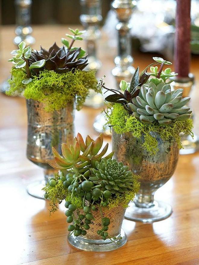 Sáng tạo chậu trồng cây theo những cách này, bạn sẽ mang cả sắc màu trang trí lạ cho căn nhà - Ảnh 12.