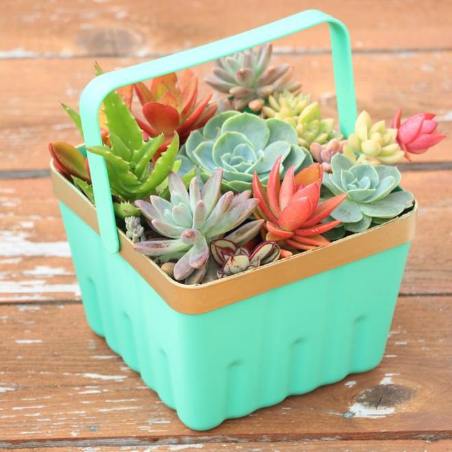 Sáng tạo chậu trồng cây theo những cách này, bạn sẽ mang cả sắc màu trang trí lạ cho căn nhà - Ảnh 10.