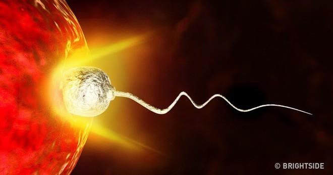 Bạn biết không, chính trứng mới là người quyết định chọn tinh trùng để thụ thai như thế này - Ảnh 4.
