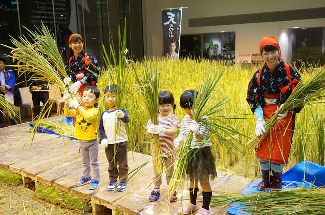 Công ty cho nhân viên trồng lúa trong văn phòng, cuối vụ đưa cả con đến gặt cho vui - Ảnh 8.