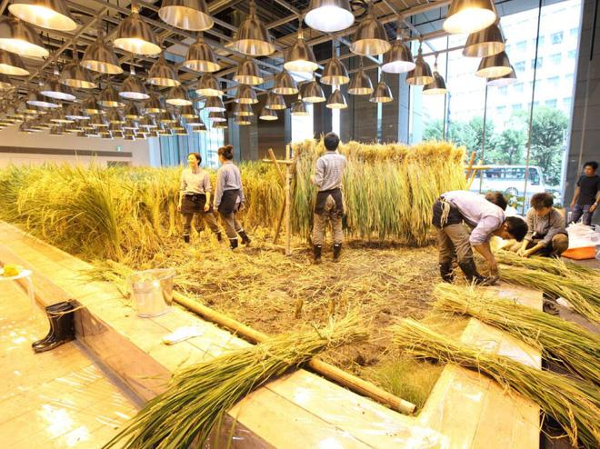 Công ty cho nhân viên trồng lúa trong văn phòng, cuối vụ đưa cả con đến gặt cho vui - Ảnh 5.