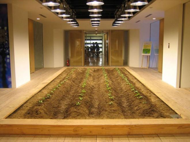 Công ty cho nhân viên trồng lúa trong văn phòng, cuối vụ đưa cả con đến gặt cho vui - Ảnh 15.