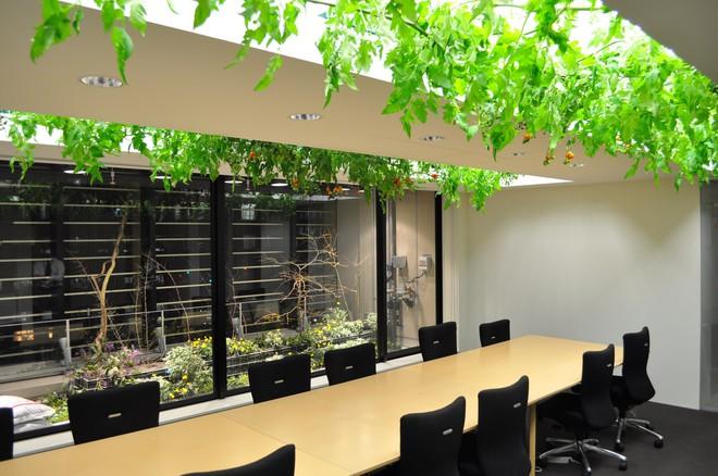 Công ty cho nhân viên trồng lúa trong văn phòng, cuối vụ đưa cả con đến gặt cho vui - Ảnh 4.