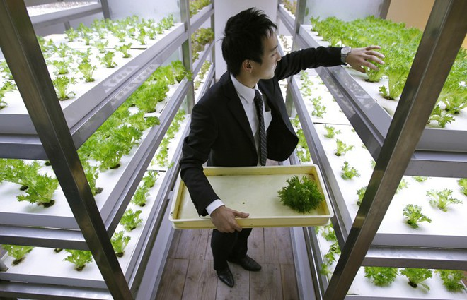 Công ty cho nhân viên trồng lúa trong văn phòng, cuối vụ đưa cả con đến gặt cho vui - Ảnh 2.