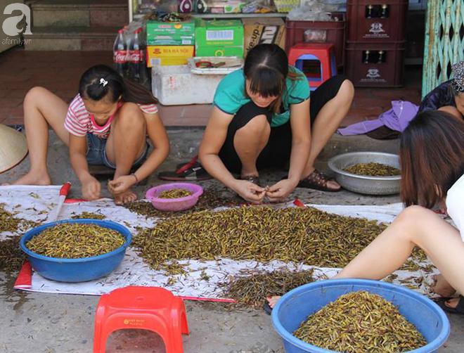 Hà Nội: Mùa World Cup, châu chấu trở thành đặc sản, giá gần 200 nghìn đồng/kg vẫn được săn đón - Ảnh 1.
