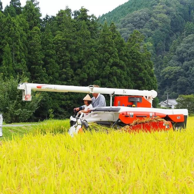 Ngôi nhà nhỏ và cuộc sống đơn sơ của gia đình Nhật Bản ở làng quê khiến bao người ngưỡng mộ - Ảnh 5.